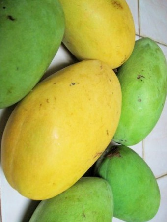fresh-philippine-mangoes-large