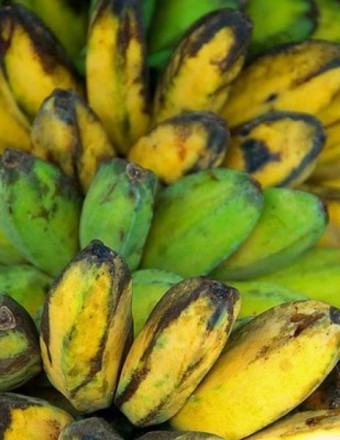 fresh-philippine-banana-saba